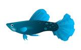 Guppies are blue. Exotic decorative aquarium fish. Vector