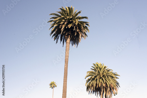 A view of palm trees in the blue sky in California