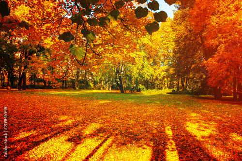 Fall trees in sunny autumn park lit by sunshine - sunny fall landscape in soft sunlight - 219945949