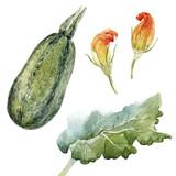 Watercolor zucchini set - 219947156