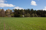 Spring field near the forest. - 219951397