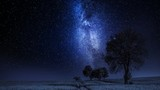 Moving milky way and field with trees at night, timelapse, 4K - 219966114