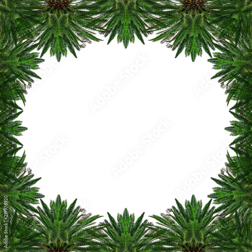 Tropical palm trees in the form of a background or frame on white.