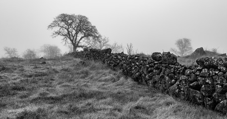 Tree and stone wall fence on a foggy morning in black and white