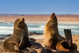 Southern Fur Seals - 220022369