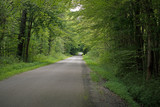 Rural road under tree canopy - 220032933