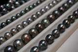 black pearls of french polynesia - 220084142