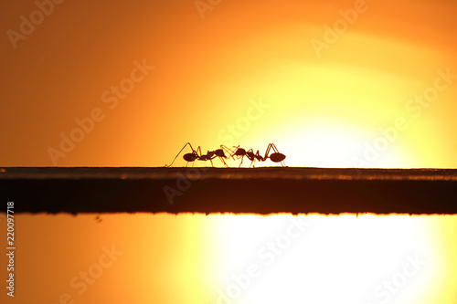 Two ants in silhouette - 220097718