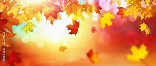 Leinwandbild Motiv Falling Autumn Maple Leaves Natural Background