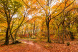 Leinwandbild Motiv Foliage in Monti Cimini, Lazio, Italy. Autumn colors in a beechwood. Beechs with yellow leaves.