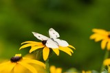 Butterfly on Flower - 220114166