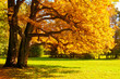 Autumn picturesque landscape. Autumn trees with yellowed foliage in sunny October park lit by sunshine - 220141754