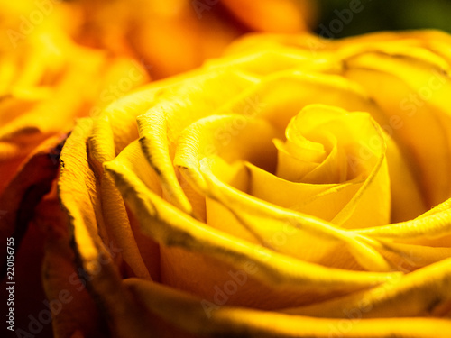 Flower close-up - 220156755