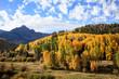 Autumn Beauty in Colorado - The Dallas Divide