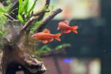 fish, aquarium, fish tank, plants,