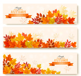 Three abstract autumn banners with colorful leaves. Vector - 220172792