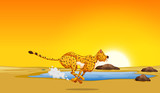 A cheetah running in the desert - 220180531