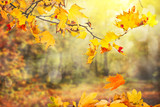 autumn leaves background - 220197194