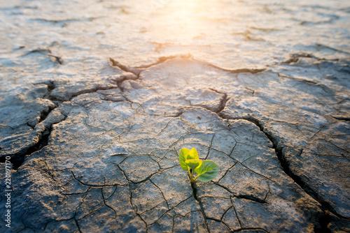 Leinwanddruck Bild plant growing in desert