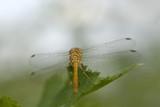 Dragonfly - Macro Sight - 220204170