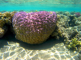 Reef coral underwater in Ras Mohammed, Egypt, Red Sea