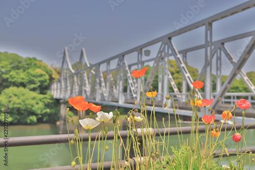 Fototapeta a flower ed near of asahi river Okayama