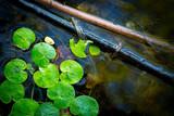 driftweeds leafs on lake water - 220231372