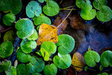 green leafage on water surfac - 220231526