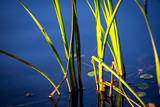 cane in water - 220231929