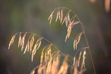 dry grass on meadow - 220232103