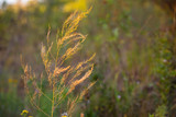 dry grass on summer meadow - 220232174
