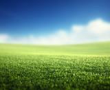 field of spring grass (shallow DOF) - 220237105