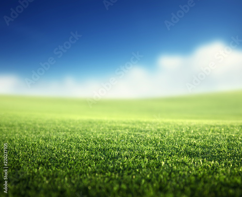 field of spring grass (shallow DOF)