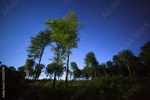 Nocne rozgwieżdżone niebo las Polska kaszuby - 220237192