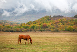 Hores graze near the mountain in the pasture in the autumn. - 220237373