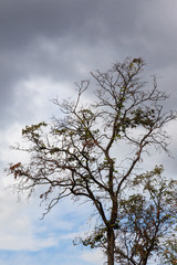 A tree without leaves against a gloomy autumn sky