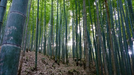 Bamboo, Bambus in der Natur © Omm-on-tour