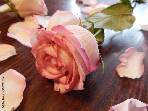 Foto Murales Beautiful pink roses close-up