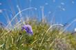 Flower - 220294723