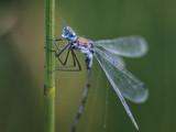 dragonfly - 220296517