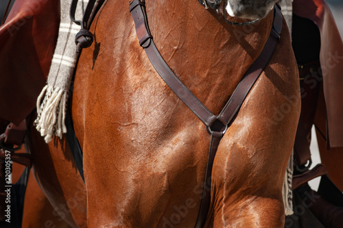 Saddle horse chest closeup