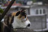 cat posing on the roof of the house - 220316999