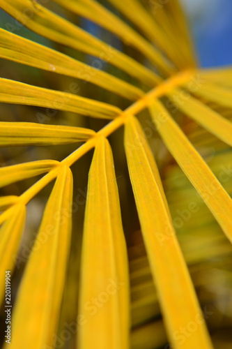 yellow leaves close up - 220319904