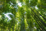 upward view of the bamboo forest