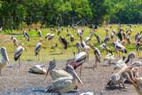 Birds in Zoo in Bangkok - 220324396