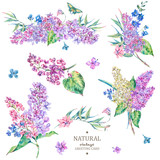 Set of vintage floral vector bouquet of lilac  - 220362735