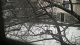 View from a room window through a tree of a snowy house backyard - 220370158