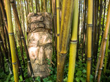 Mustach Guy Through Bamboo