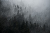 Mystic foggy forest in vintage style. Firs in the fog on the mountainside.