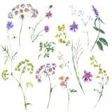 Watercolor summer set of flowers, wildflowers. - 220381542
